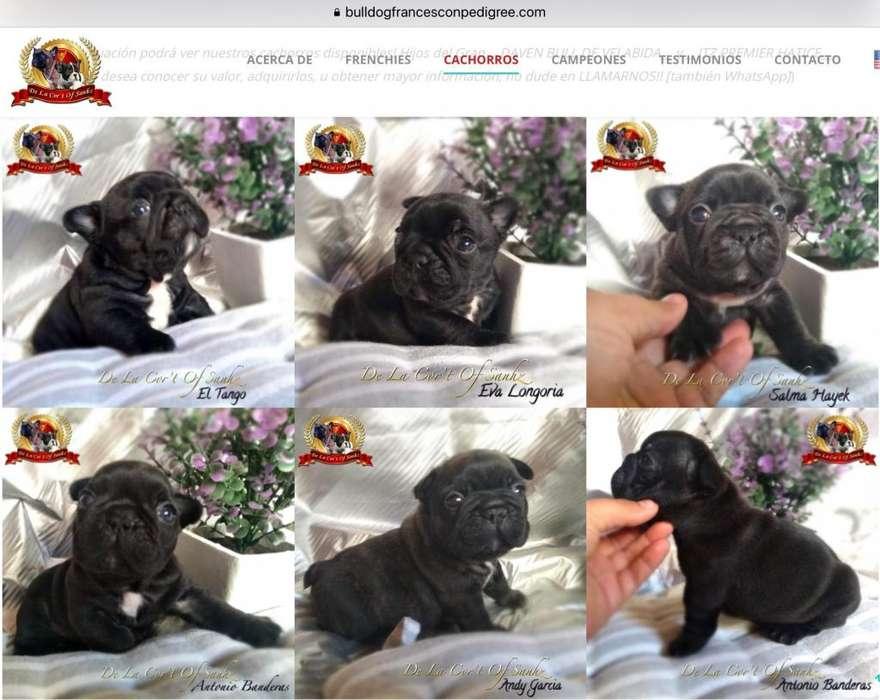 INIGUALABLES Cachorros Bulldog Francés con Excelente Pedigrí Líneas de Campeones!!