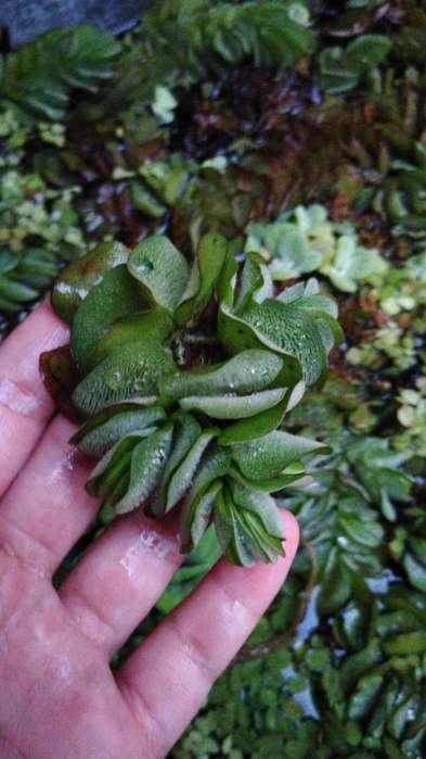 Plantas Acuaticas