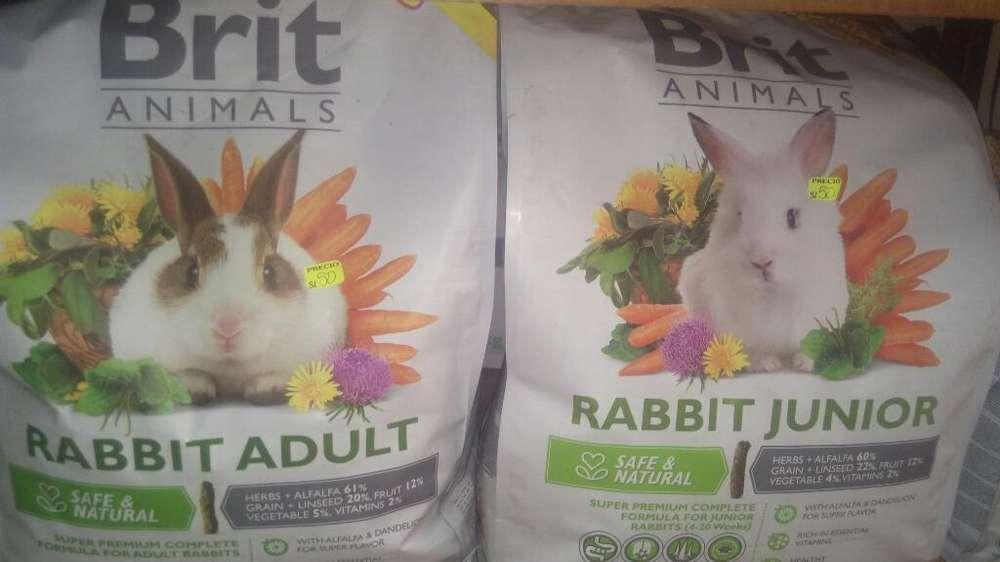 Brit para Conejos
