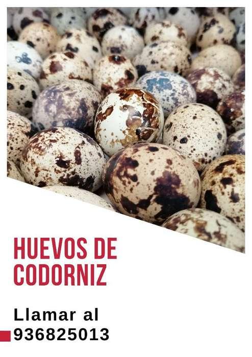 Huevos de Codorniz por Mayor