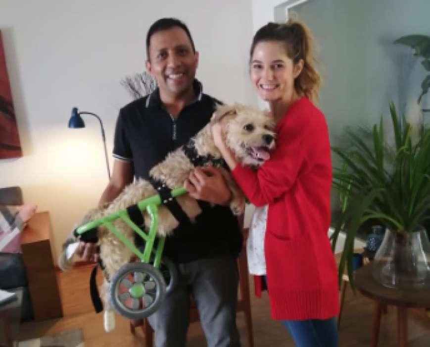 Caminadora silla de ruedas para perro Chico