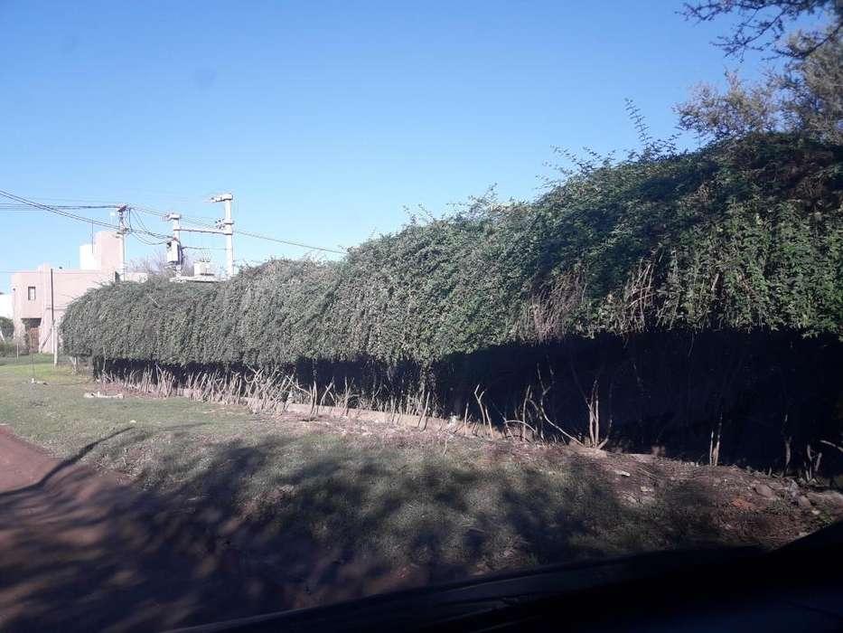 VENDO terrenazo en V Rivera Indarte