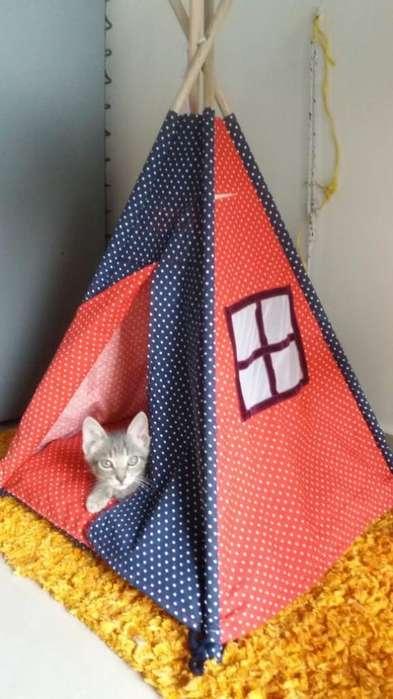 Casa para Perros O Gatos
