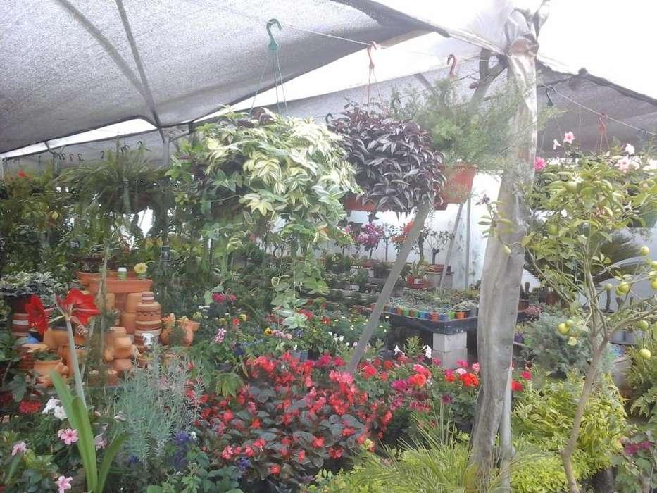 servicio de jardineria y cesped