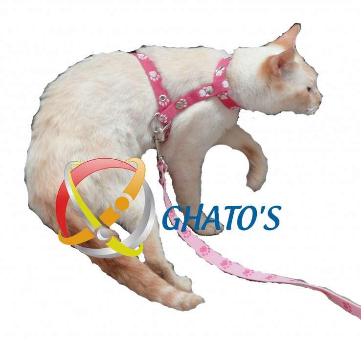 Arnes para <strong>gato</strong>s