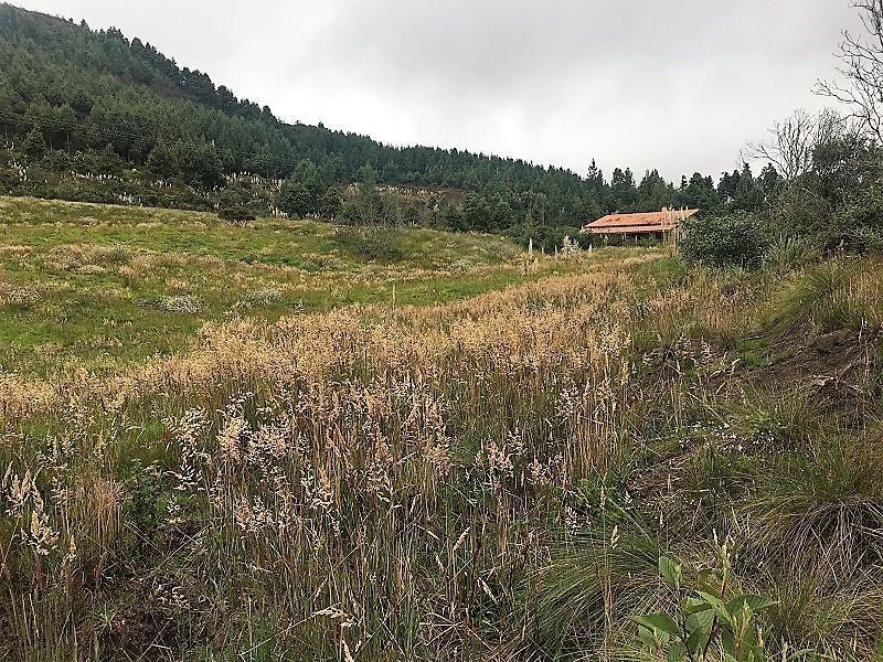 En VENTA Hacienda apta para Agricultura y Ganadería con Abundante Agua de Riego, sector La Paz. Cod: HV101