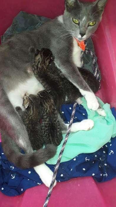 Se Dan en Adopcion Gatos de Un Mes