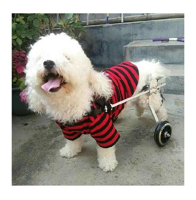 Vendo Silla Reahabilitacion para <strong>perro</strong>