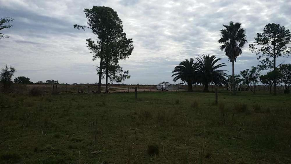 VENDO 85 HAS DE CAMPO EN CERES