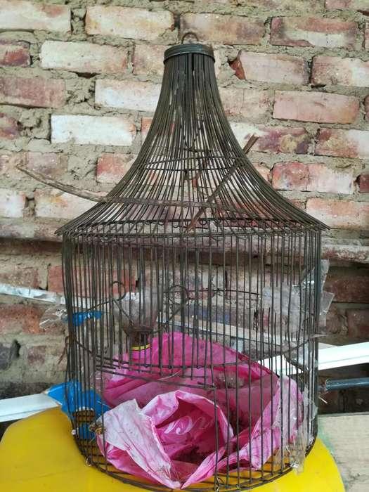 Jaula para aves