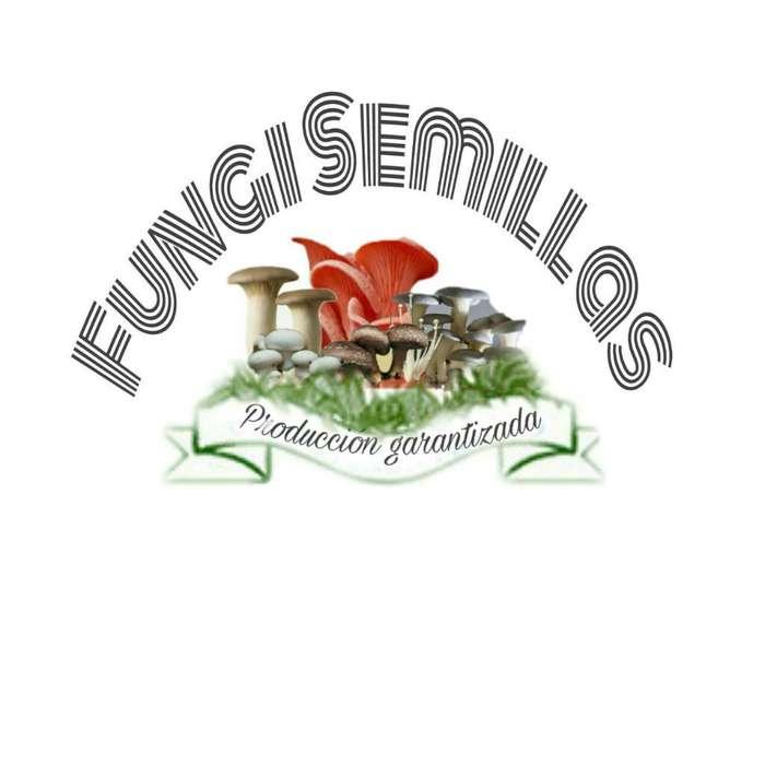 Venta de Semillas de Hongos Comestibles