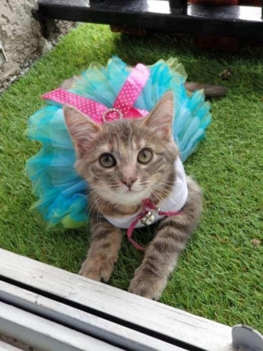 Vestidos Tutu para La Mascota