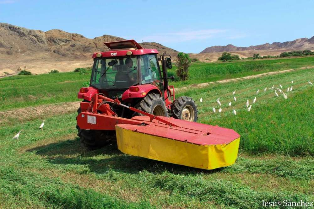 Pacas de alfalfa en Lima