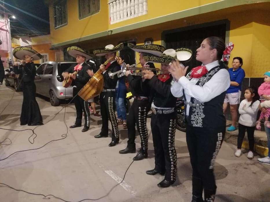 Mariachi Oro Y Plata 310 3403418