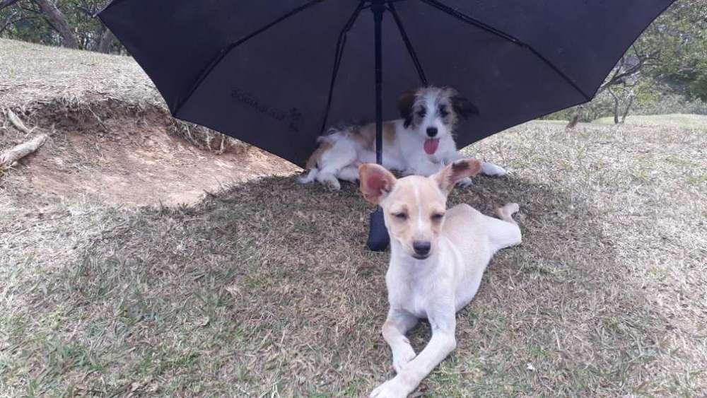 Cachorros de Raza Pequeña Muy Tiernos
