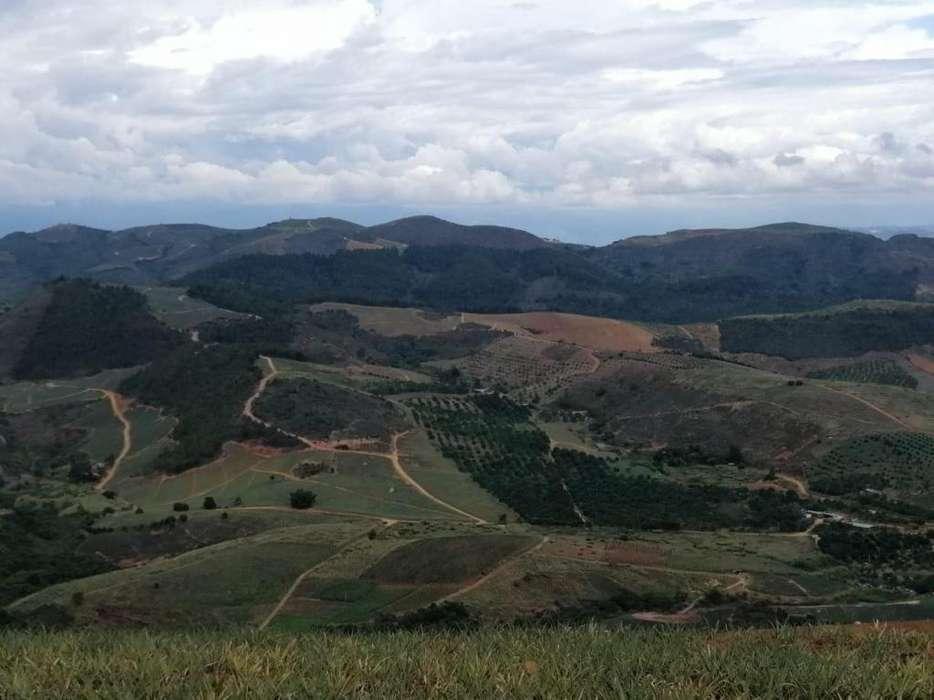 Finca ( Giron ) 4 hectareas