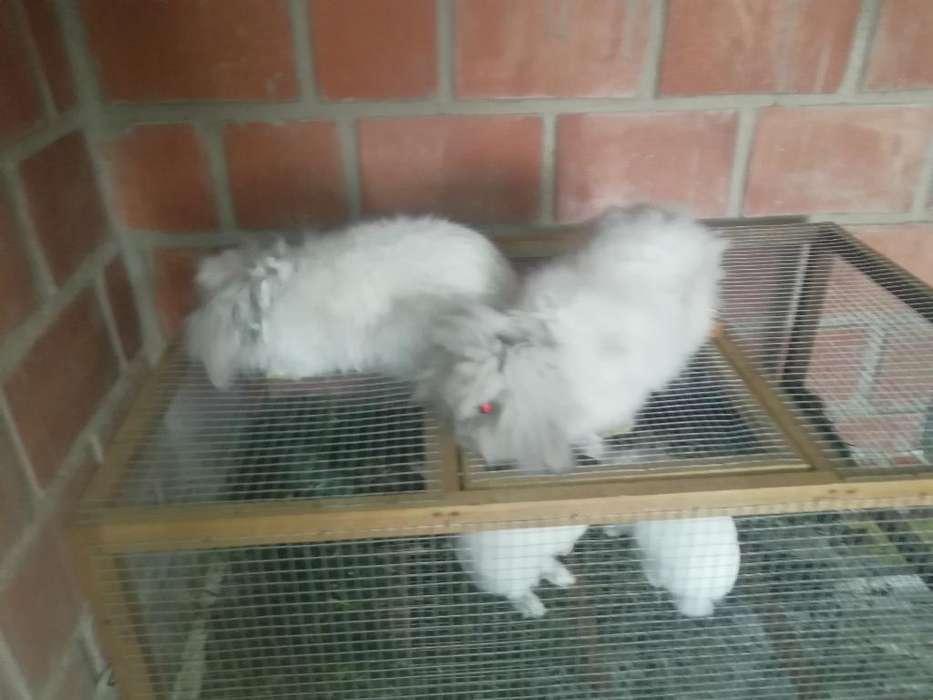 Pareja de Conejos Leoncitos