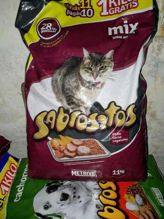 Sabrositos Gato
