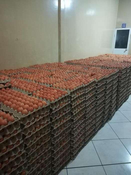 Huevos Frescos Y Al Mejor Precio.