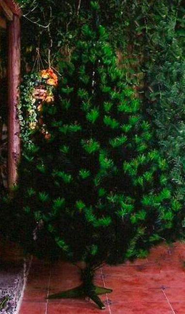 c4e7beee120 De arboles de navidad  Muebles - Hogar - Jardin en venta en Colombia ...