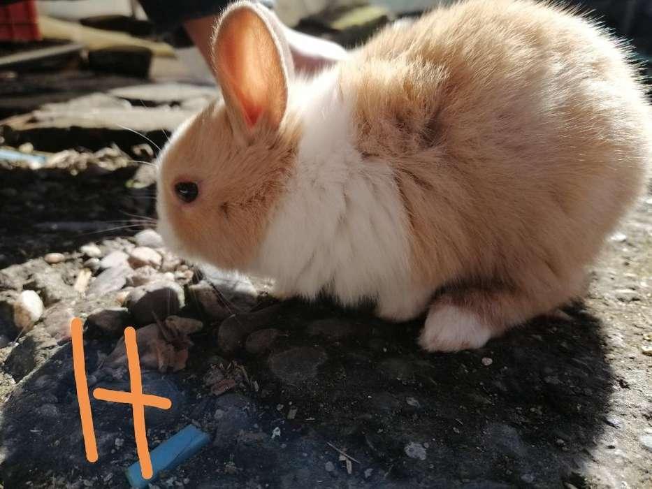 Venta de Conejitos para Mascotas