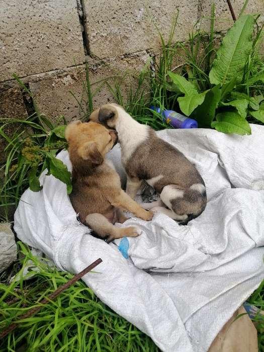 Perras Cachorras en Adopción