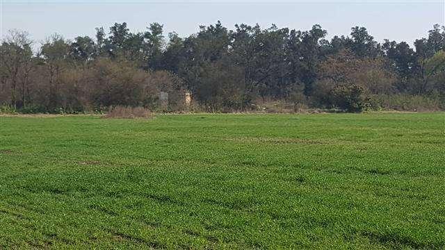 54 has agricolas de campo en Lobos