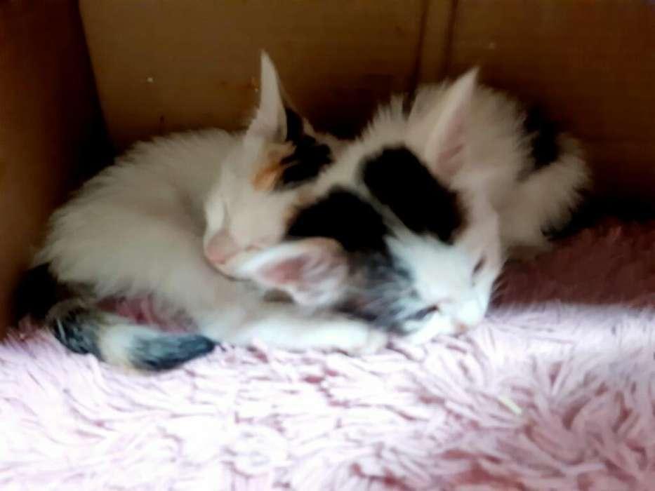 Lindas Gatitas en Adopcion (urgente)