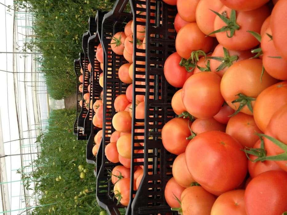 Tomate Riñon, Salsa de tomate y tomates deshidratados