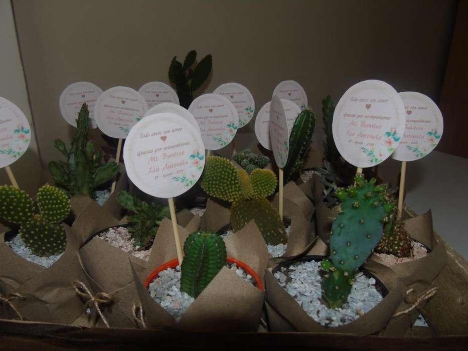 Recuerdos Plantas Cactus Y Suculentas