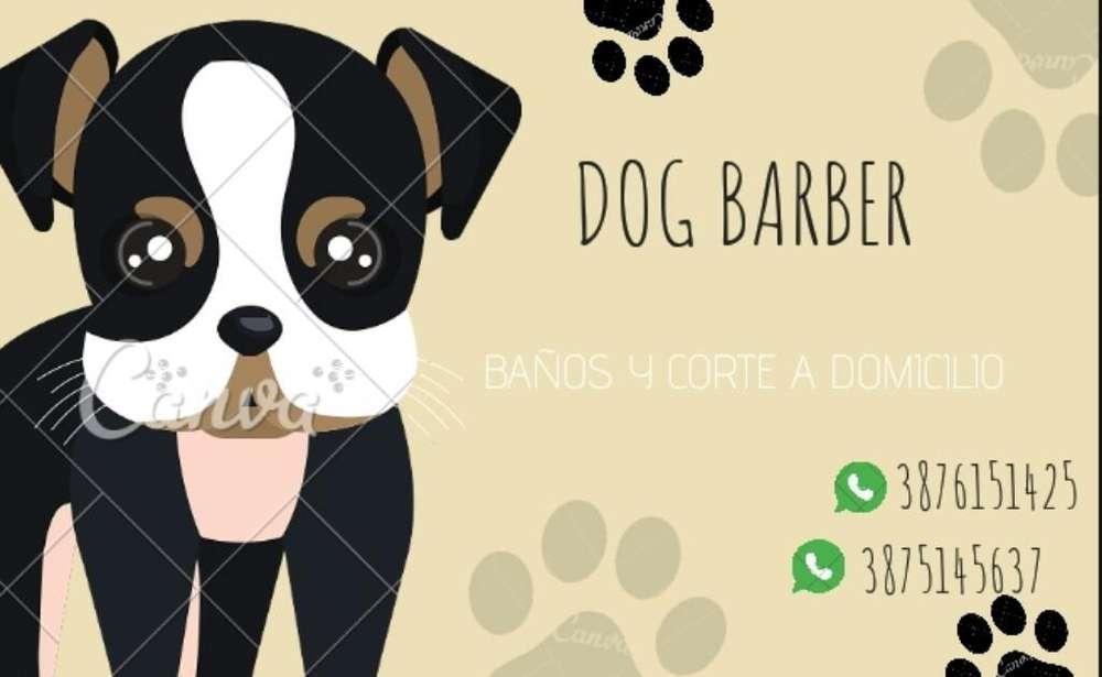 Servicio para Mascotas