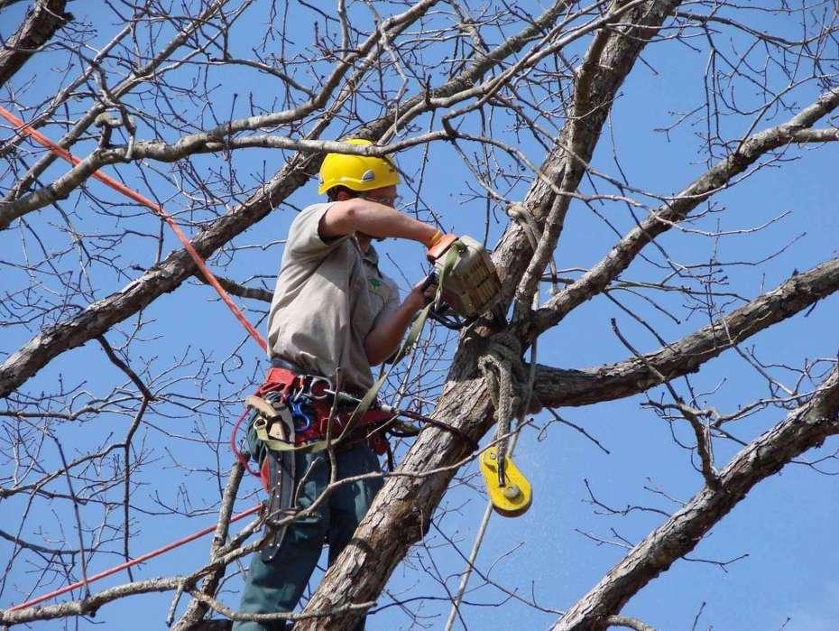 Poda, tala o siembra de árboles