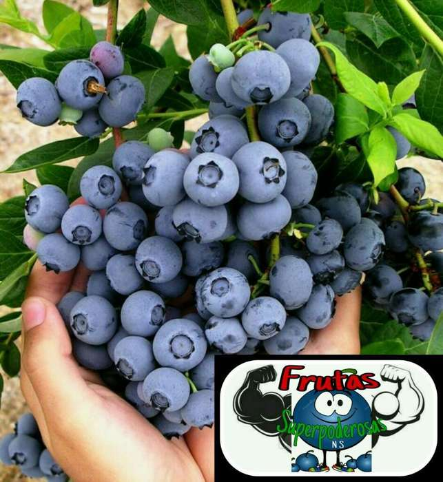 Fruta Organica Fresca