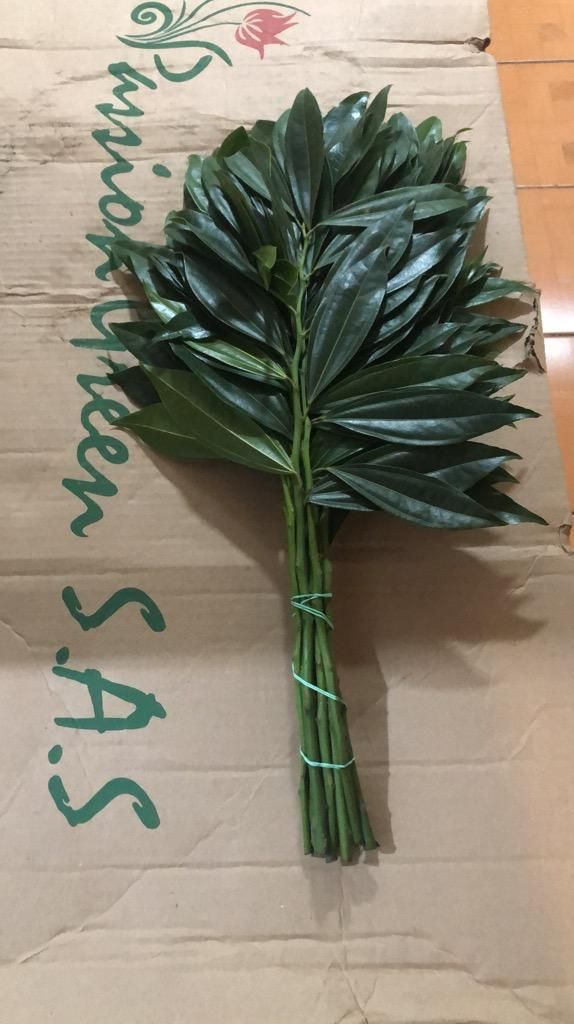Follage Para Buquet Y Arreglos Florales Rumiñahui