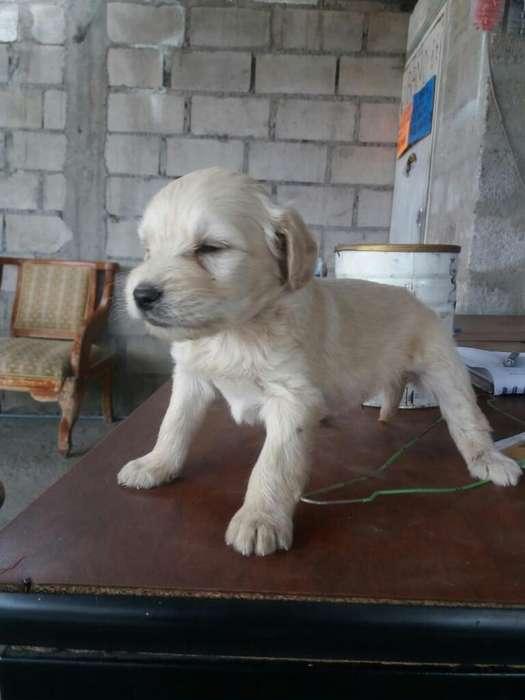 Adopcion Cachorros
