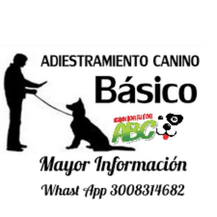 <strong>adiestramiento</strong> Canino Básico