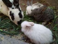 Conejitos bebes!!