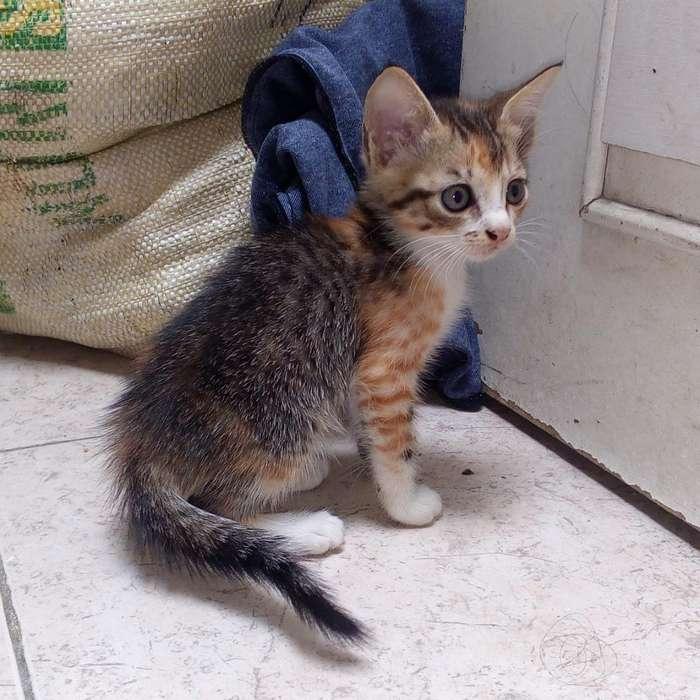 Doy 4 Lindos Gaticos en Adopcion en Cali