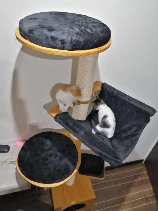 Elegante gimnasio rascador para gatos 3203958639 whtaspp