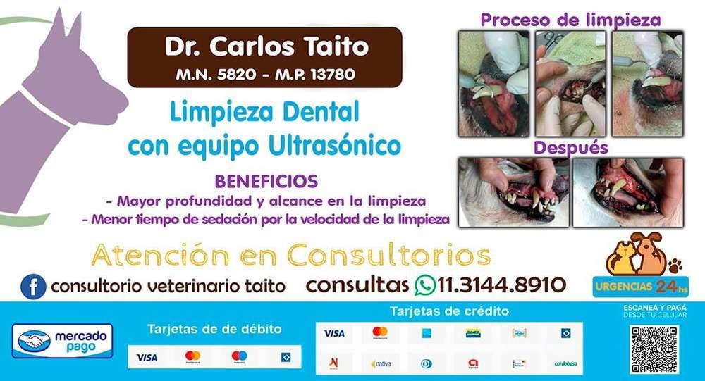 LIMPIEZA DENTAL CON ULTRASONIDOS PARA <strong>perros</strong> Y GATOS