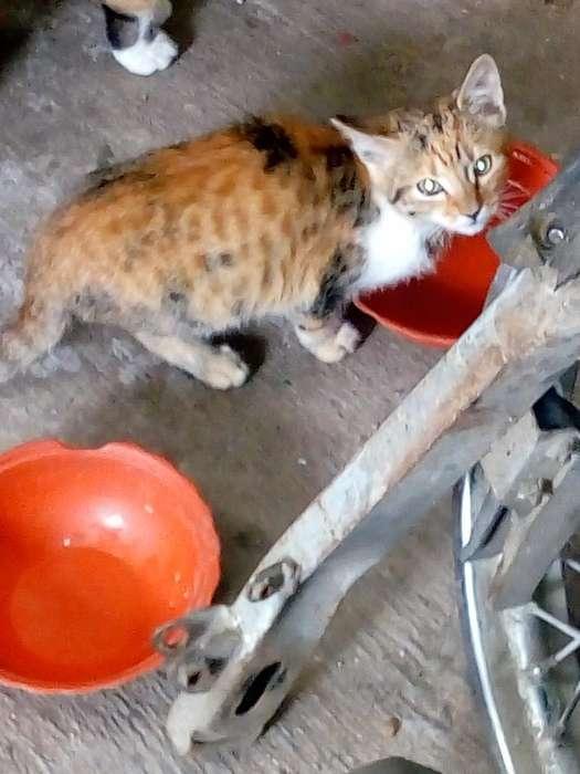 Lindos <strong>gatitos</strong>