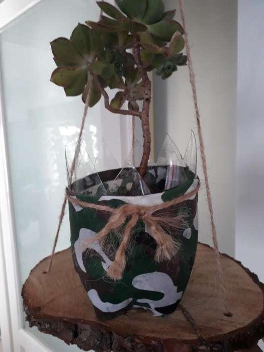 Plantas con Portamaceta