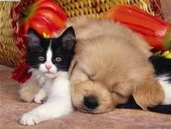 Mascotas .... Traslados Exclusivos Para Su Mascota
