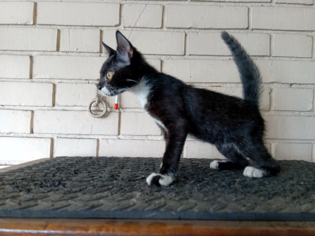 Adopta Un Gatico