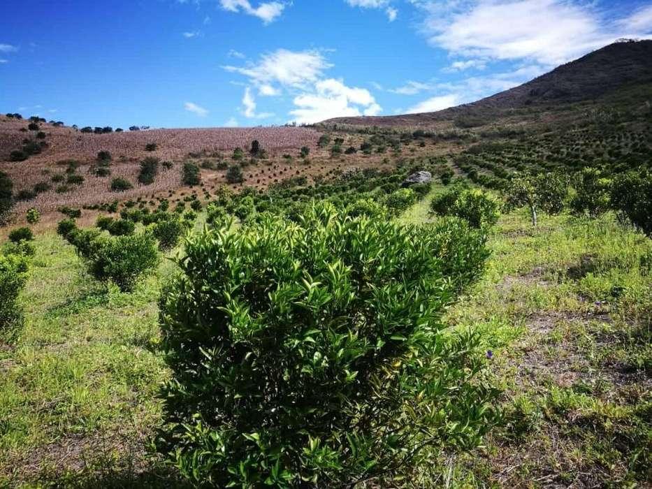 Venta de 45 hectáreas en Mira Carchi, con plantas de limon naranja y mandarina