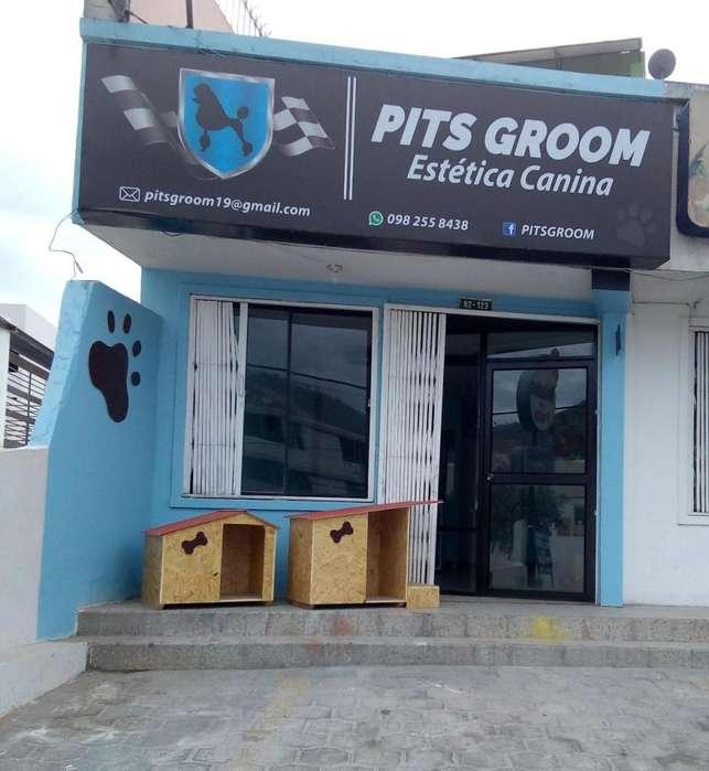 Peluquería Canina 0982558438