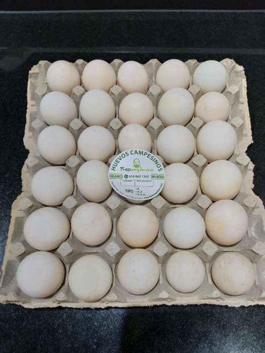Embriones de Pato Huevos de Pato Fertil