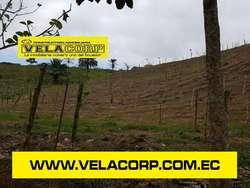 VENDO 8.93 HECTÁREAS EN VALLE HERMOSO