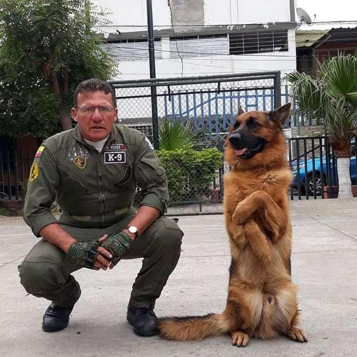 Instrucciones Canina Pastores Alemanes
