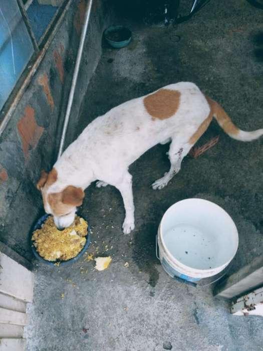Adopción Perro